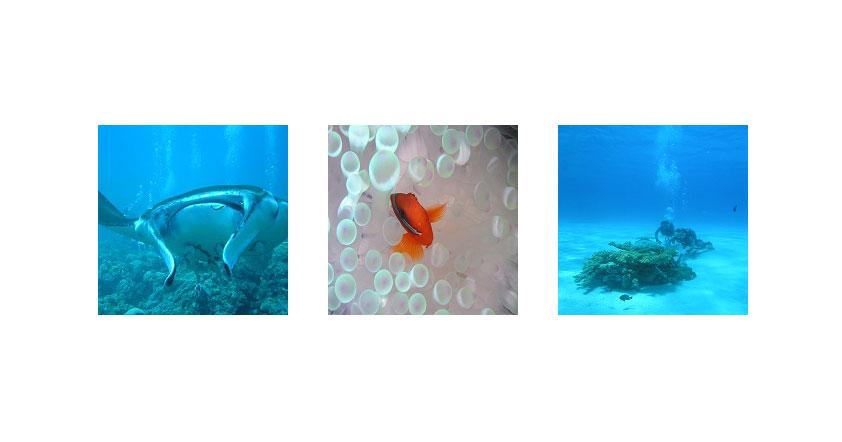 石垣島のダイビングショップ02