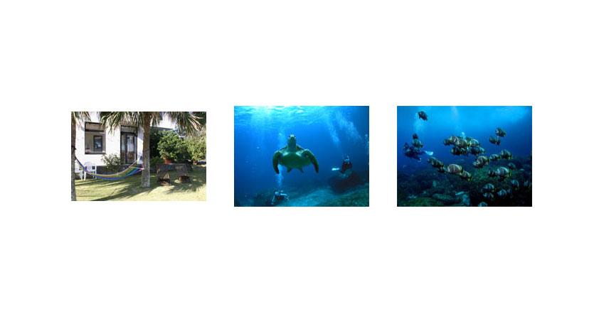 八丈島のダイビングショップ02