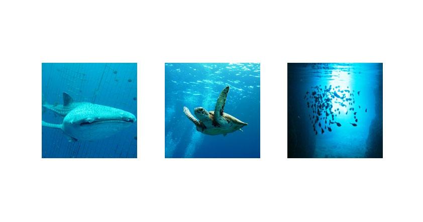 沖縄のダイビングショップ02