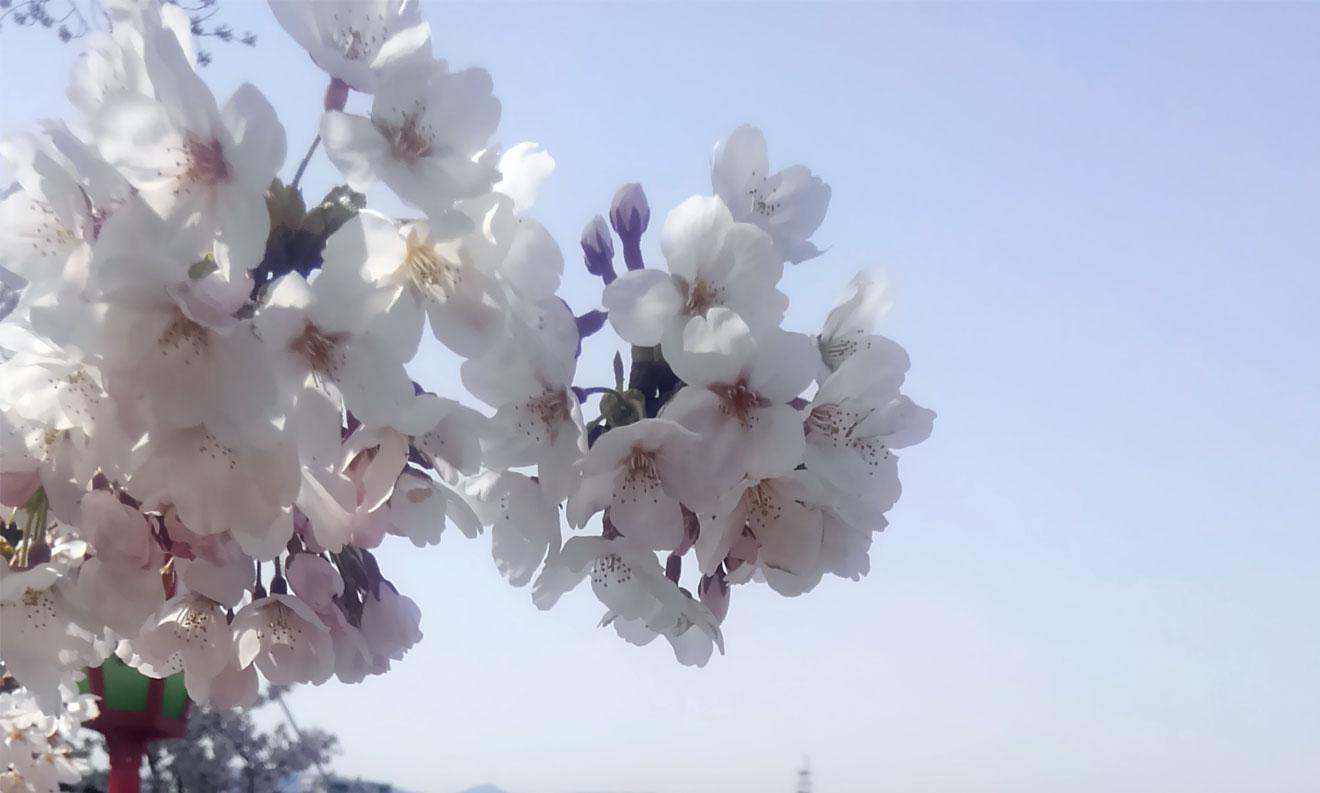春過ぎましたね