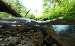 身近な水中撮影