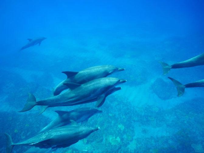 群れで泳ぐイルカの写真